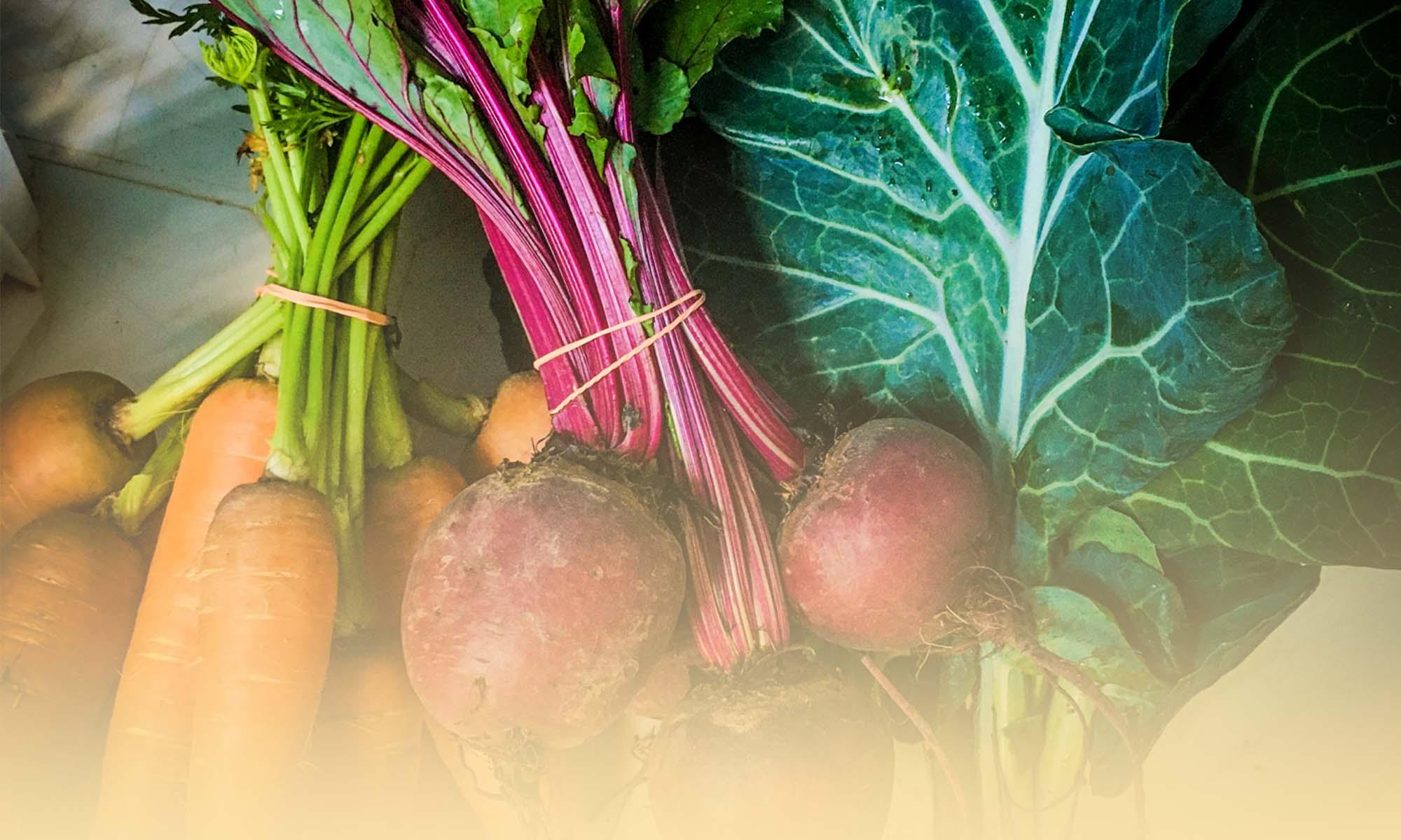 Rede Agroecológica Raízes da Mata
